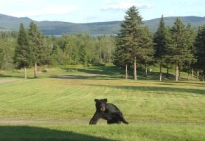bear2013
