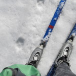 spring skiing with coyote tracks on our trails