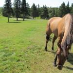 horse at ramblewood